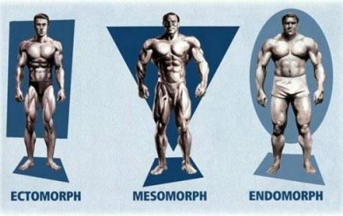 Somatotipos: Ectomorfo, Mesomorfo, Endomorfo.